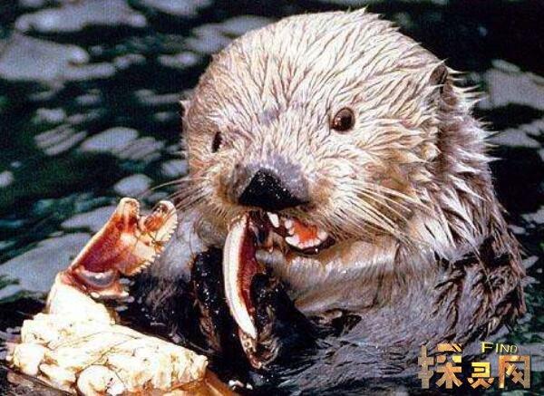 树懒为什么没灭绝_树懒为什么会拉人下水,树懒被当水鬼拉人下水是谣言(2)【图
